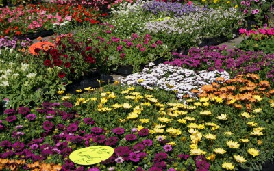 Le marché floral 2014, une réussite !